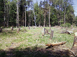 """Stumps are all that remain of scores of trees that were sacrificed to build a wildly-expensive """"Nature Center"""" at Letchworth."""