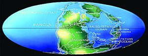 Plate tectonics pushed the continents together to form the super-continent Pangea and super-ocean Panthalassa