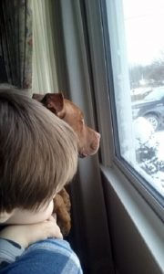 "Nathan Winograd posted this photo of a Buffalo child and his dog, which appeared in Artvoice, on his Facebook page and commented: ""An innocent dog killed by police in front of his family, including this little boy. Deputies raided his home based on the false information of a snitch – ""a criminal who acted as an informant to get out of being arrested."" No one was arrested, no drugs were found, and the family was left to clean up the bloody mess."""