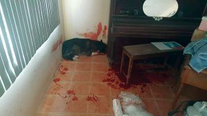 When a dog is shot, there is no apology. the mess is left for the owner to clean up. Even if the owner has never sold drugs or doesn't even use drugs....
